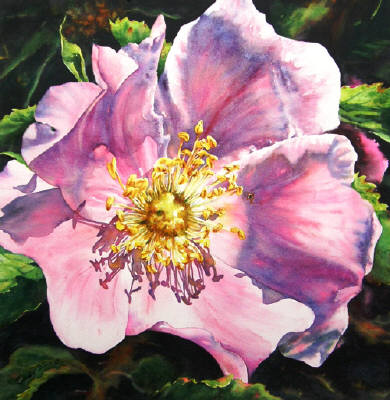 Artist: Cindy Barratt, Title: Alberta Rose  Single - click for larger image
